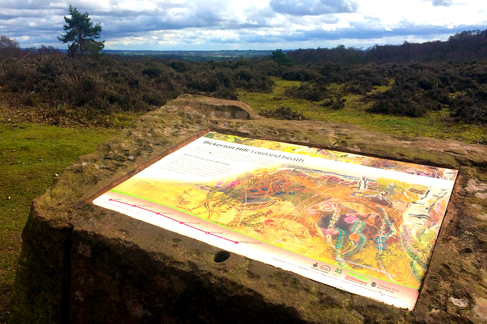 Lowland heath on Bickerton Hill